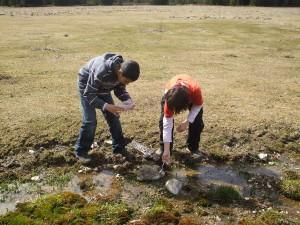 Observation de la biodiversité aquatique